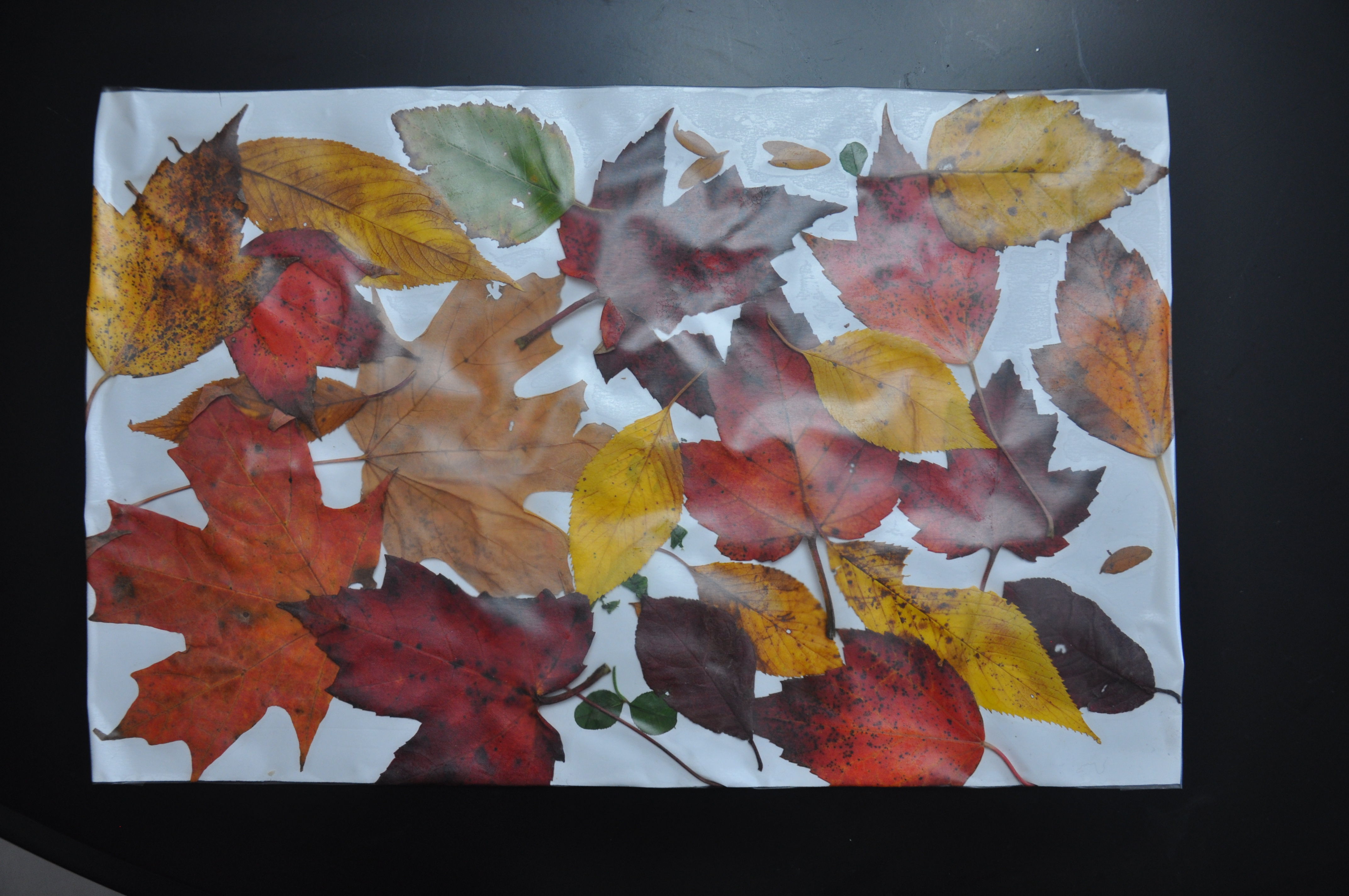 Contact Paper Placemats with Leaf